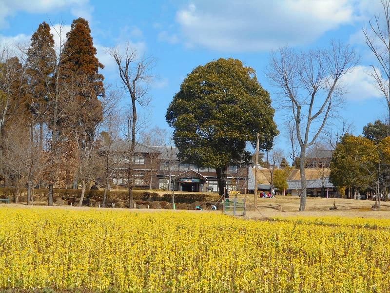 【29】弐の畑